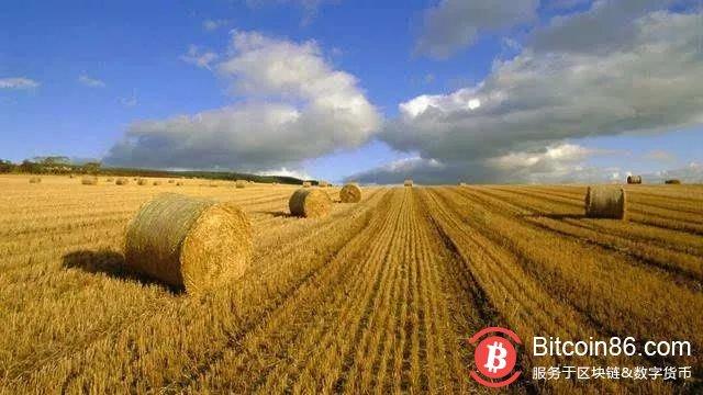 什么才是真正的区块链+农业?
